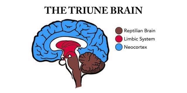 sürüngen beyin ilkel beyin